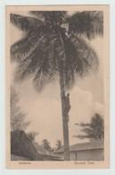 ZANZIBAR (TANZANIE) - COCONUT TREE - Tanzanie