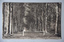 LA FERTE-VIDAME (EURE ET LOIR), Allée En Forêt - France