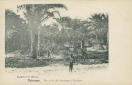 BJ OUIDAH / Un Coin De Brousse à Ouidah / - Benin