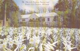 The Lili Perfume Factory And Easter Lily Gardens, Bermuda (plantation Hibiscus) Circulé 1953, Flamme Illustrée(pingouin) - Bermudes