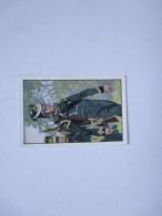 STURM  Zigaretten DEUTSCHE UNIFORMEN Bild N.136 Artillerie ARTIGLIERE Batterie Cannonier  A Cavallo - Sturm