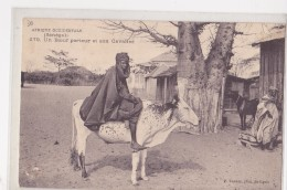 SENEGAL  BOEUF PORTEUR - Senegal