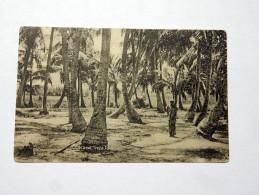 Carte Postale Ancienne : NIGERIA : Coconut Trees, IDDO - Nigeria