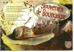 Escargot Et Blason - Souvenir De Bourgogne - Le Petit Gris - Bourgogne