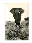 Cp - ELEPHANT - - Elephants