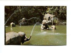 Cp - ELEPHANTS - Disneyland - Elephants