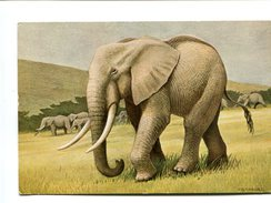 Cp - ELEPHANT D'Afrique - - Elephants