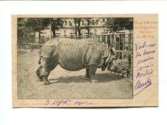 Cp - RHINOCEROS - Jardin Zoologique De Berlin - Rhinocéros