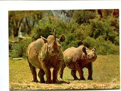 Cp - RHINOCEROS - - Rhinocéros