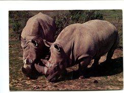 Cp - RHINOCEROS - Thoiry En Yvelines (78) - Rhinocéros