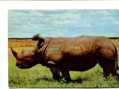 Cp - RHINOCEROS - Kenya - Rhinocéros