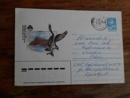 CCCR Rusia Birds - Oiseaux