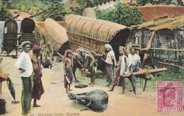 Branding Cattle    - Scan Recto-verso - Sri Lanka (Ceylon)