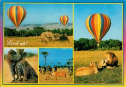 KENYA  LOOK UP!   AFRICAN WILDLIFE       MAXICARD   (VIAGGIATA) - Kenia