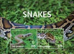 Gambia-2015-reptiles Snakes - Snakes
