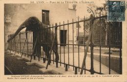 LYON - PARC DE LA TETE D'OR - L'Eléphant LOULOU - Lyon