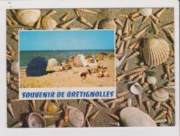 CPM - SOUVENIR DE BRETIGNOLLES - Coquillages - Bretignolles Sur Mer
