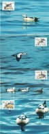 TAILED DUCK SCHECKENTE CANARD WATER BIRDS Les Oiseaux Aquatiques  ALAND FINLAND 2001 MI 183 - 186  MAXI MAXIMUM CARDS - Ducks