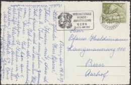 Suisse 1957. Oblitération De Berne. Exposition De Chiens. Saint Bernard à Longs Poils (??) - Hunde