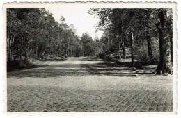 Bouwel (Grobbendonk), De Lindeens (Kruispunt)  - Uitg. Bruynseels, Herenthout - 2 Scans - Grobbendonk