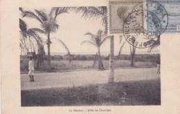 CONGO BELGE LA MISSION ALLEE DE COCOTIERS AFRIQUE AFRICA - Belgian Congo - Other