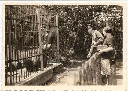 Photo , Un OURS Au Zoo , Dim. 6.0 X 9.0 Cm. - Non Classés