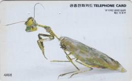 Korea, MO9806123, Mantis, Insect, 2 Scans. - Corea Del Sud