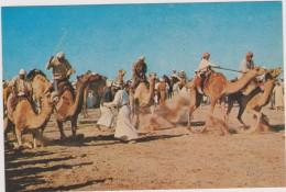 SAUDI ARABIA,ARABIE SAOUDITE,SAUDITA,ARAB EMIRATES,BEDOUIN,CAMEL,COURSE,CHAMEAU - Arabie Saoudite