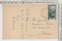 VITERBO ANNULLO CASTEL CELLESI ITALIA AL LAVORO  1951 PASCOLO GREGGE PECORE PAESAGGIO MONTANO - Viterbo