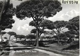 Toscana-grosseto-castiglione Della Pescaia Veduta Viale Pineta Anni 50 - Italia