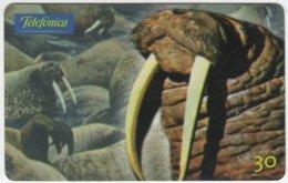 BRASIL C-242 Magnetic Telefonica - Animal, Walrus - Used - Brésil