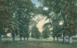 GB WARKTON / The Avenue / COLORED CARD - Northamptonshire