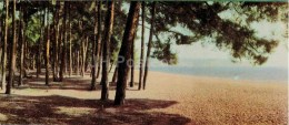 The Cape Pitsunda - Abkhazia - Caucasus - 1966 - Georgia USSR - Unused - Géorgie