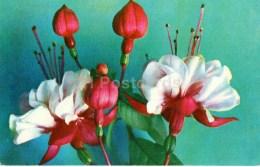 Fuchsia - Flowers - 1973 - Russia USSR - Unused - Fleurs