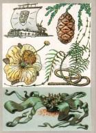 Kon Tiki - Welwitschia - Rattan Palm - Baobab - Sequoia - Miracle Trees - Amazing Plants - 1989 - Russia USSR - Unused - Flowers, Plants & Trees