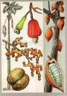 Cacao - Seychelles Nut - Papaw - Breadfruit - Fabulous Fruits - Amazing Plants - 1989 - Russia USSR - Unused - Flowers, Plants & Trees