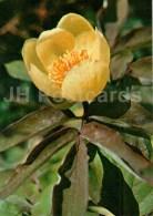 Peony - Paeonia Mlokosewitschii - Endangered Plants Of USSR - Nature - 1981 - Russia USSR - Unused - Fleurs, Plantes & Arbres