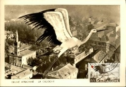 ALGERIE - Carte Maximum - Détaillons Collection - A Voir  - Lot N° 16277 - Algérie (1924-1962)