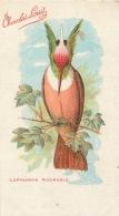 OISEAU  LOPHORNIS ADORABLE  CARTE POSTALE EDITEE POUR LE CHOCOLAT LOUIT FORMAT  14 X 7.50 CM - Oiseaux