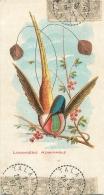 OISEAU  LOGGIGESIE ADMIRABLE   CARTE POSTALE EDITEE POUR LE CHOCOLAT LOUIT FORMAT  14 X 7.50 CM - Oiseaux