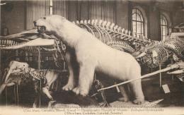 MONACO  - Musée Zoologique - Museo Oceanografico