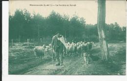 Berger  Et Son Troupeau De Moutons Rentrant Au Bercail    Marmande   Elevage - Autres Communes
