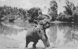 "04447 ""CEYLON - ELEPHANT"" ANIMATA. CART NON SPED - Sri Lanka (Ceylon)"