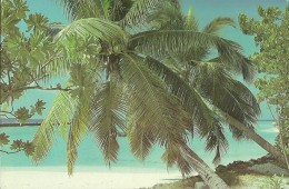 MALDIVES (59) - Maldive