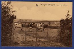 BELGIQUE MOMIGNIES Paysage Route De Bourges ; Troupeau De Vaches - Momignies