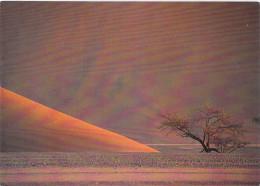 Afrique-NAMIBIE Namibia At Sossusvlei  Désert Du Namib PRIX FIXE - Namibie