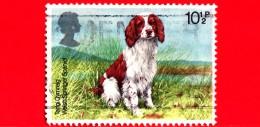 GB  UK GRAN BRETAGNA - Usato - 1979 - Cani - Dogs - Canis Lupus Familiaris - Welsh Springer Spaniel - 10 ½ - Usati