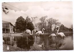 5000 KÖLN - DEUTZ, Rheinpark, BUGA 1957, Flamingoteich, Rhein - Seilbahn - Koeln