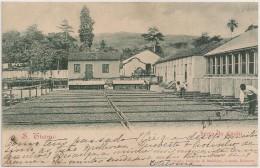 Postal S. Tomé E Principe - S. Thomé - Seca Do Cacao - Secca Do Cacau (Ed. Osorio, Delgado & Bandeira) - PostCard - CPA - Sao Tome Et Principe