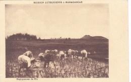 MISSION LUTHERIENNE REPIQUEUSES DE RIZ MADAGASCAR AFRIQUE - Madagascar